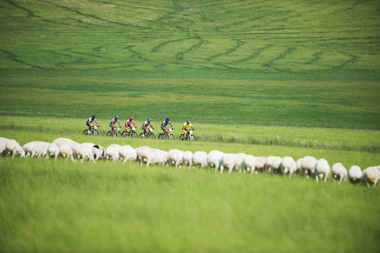 mtb2_sheep
